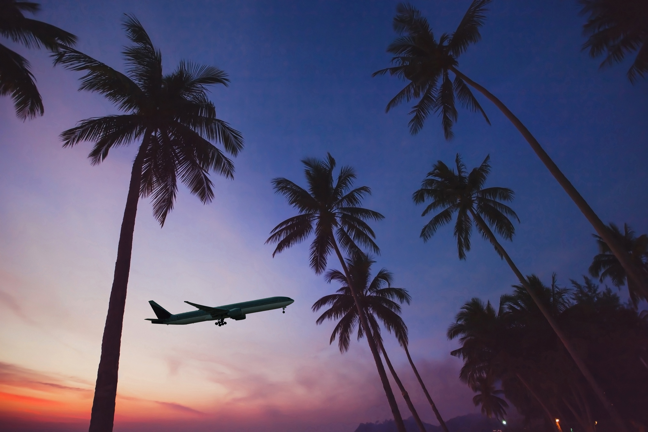 Airplane lifting off over palm trees at sunset