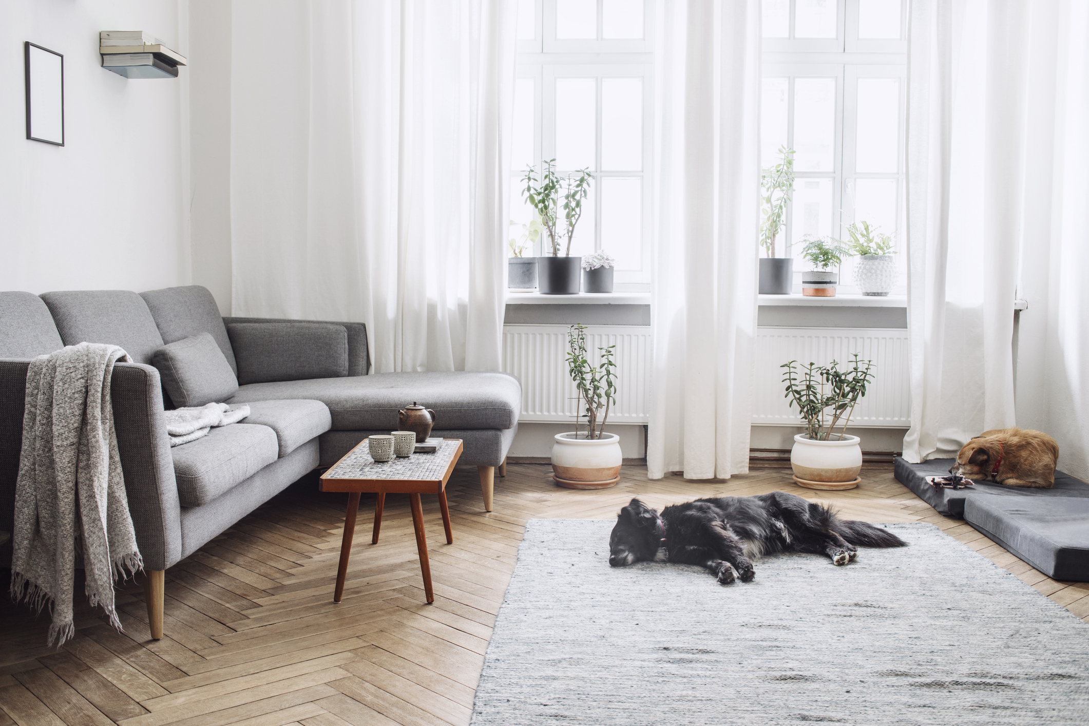 An apartment living room with dogs napping.